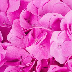 magenta color theory photographers